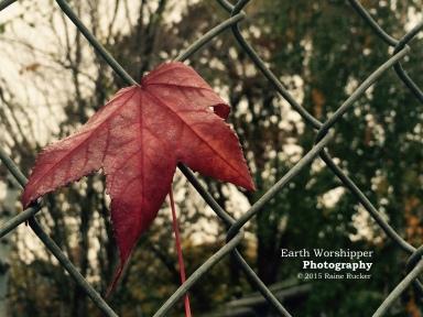 Caught Leaf