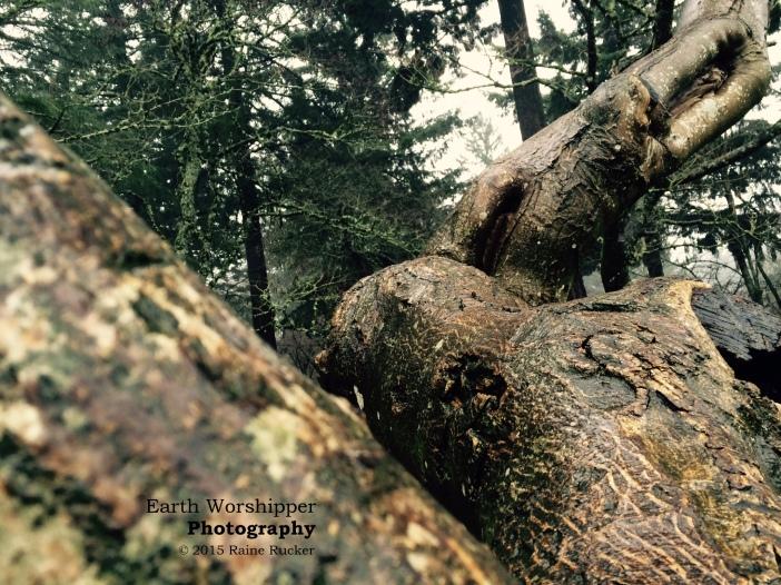 Stretching Tree