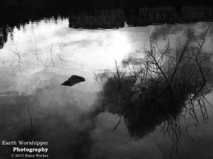 Coot: Lake