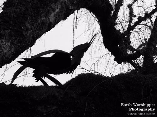 Metal Crow